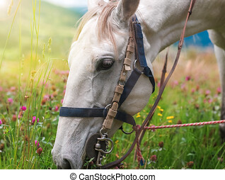 Horse eating in soft green grass in the field under tree, Grazing brown horse on the green Field. Horse grazing tethered in a field