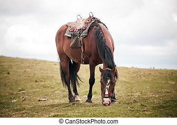 Horse eating in the field