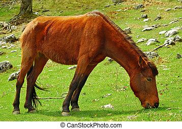 horse eating