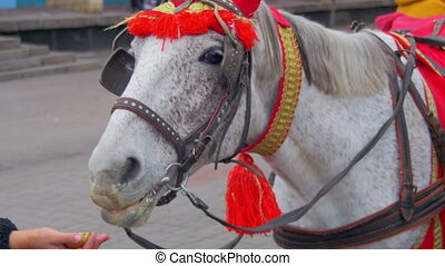 Horse Eats an Apple with a Human Hand - Horse eats an apple...
