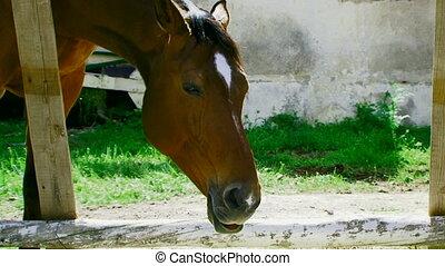 Horse eats the straw