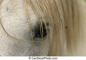 A detail view of a horse's eye partially covered by hair from its mane.