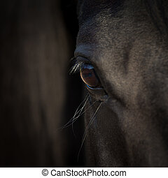 Horse eye closeup. Arabian black horse head. Horse detail on dark background.
