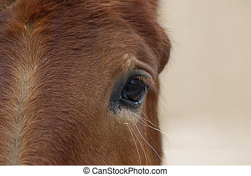 Horse Eye Closeup - Close-up horse eye