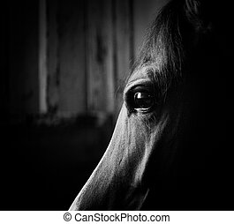 horse eye in the dark in monochromatic colors