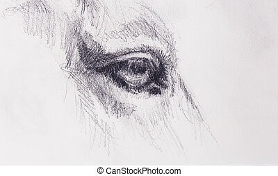 horse eye on old paper. Original hand draw.