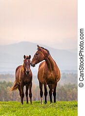 Horse family - Mare and foal in a meadow in autumn