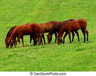 Horse farm - A horse farm in Lexington, Kentucky