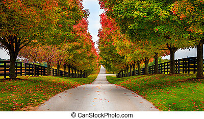 Horse farm alley - Road between horse farms in rural ...
