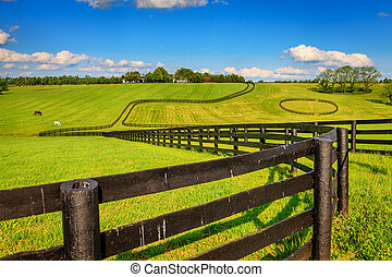 Horse farm fences - Scenic image of a horse farm with black...