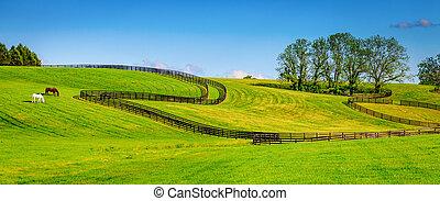 Horse farm fences - Scenic image of a horse farm with black...