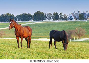 Horse Farm - Horses on a farm in Kentucky