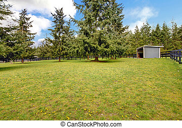 Horse farm pasture with small grey shed and trees.