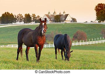 Horse Farm - Horses in the fields on a farm in Lexington,...