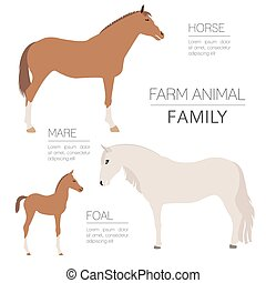 Horse farming infographic template. Stallion, mare, foal...