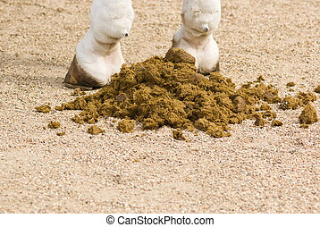 Horse feces - Closeup of horse feces