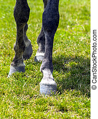 Horse Feet closeup.
