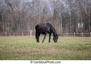 horse for a walk in the daytime