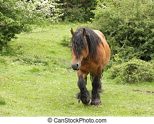 front view of horse walking towards you
