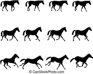 Horse gaits - Computer generated illustration: the three ...