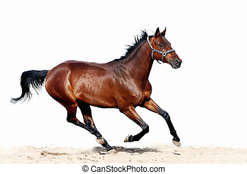 horse, farm, gallop, animal, isolated, white, equine, mare, chestnut, active, one, sorrel, stallion, horizontal, livestock, trakehner, mustang, mammal, animals, brown, race, grass, summer, halter, steppe, arabian, beauty, headstall, nature, purebred