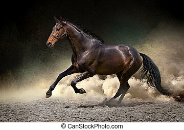 Black horse run gallop in dust desert