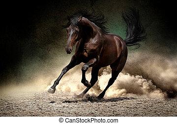 Horse gallop in desert - Black horse run gallop in dust ...