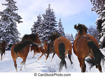 horse gallop in winter - herd of horses galloping across the...