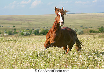 horse gallop on flowers