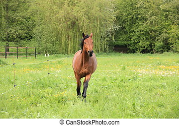 horse galloping in a meadow in spring