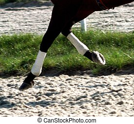 Horse galloping on the sand