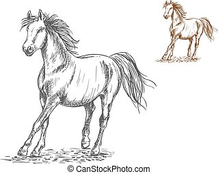 Horse galloping sketch portrait - Running white and brown...