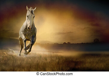Photo of horse galloping through sunset valley
