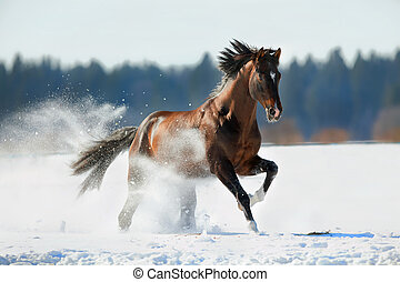 Horse gallops in winter background