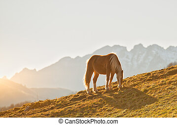 Horse grazes in a mountain meadow on the Alps