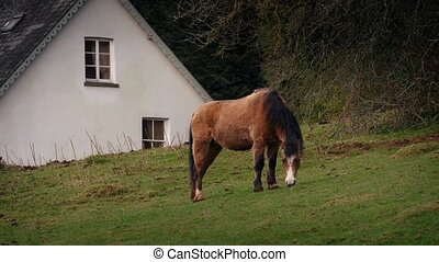 Horse Grazes Near House In The Countryside