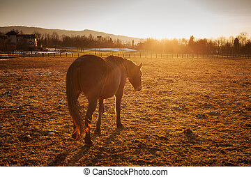 Horse grazing at sunset