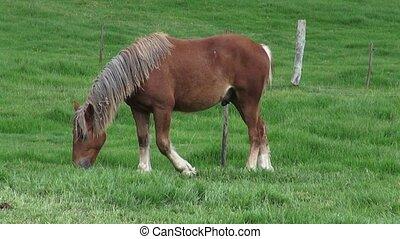Horse Grazing, Farm Animals