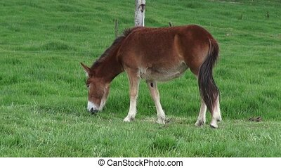 Horse Grazing, Horses, Farm Animals