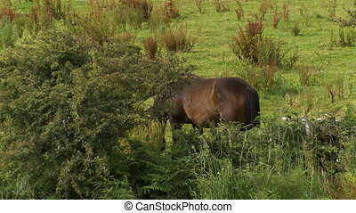 Horse grazing in a field by bushes