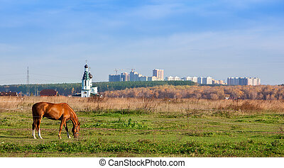 horse grazing in a field on the background of the Church