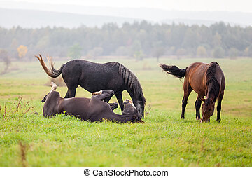 Horse grazing in a meadow in a rainy day - Horse grazing in...