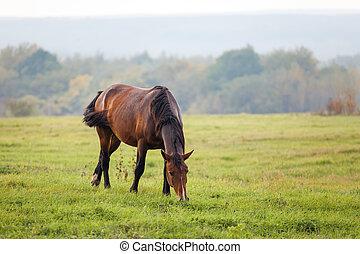 Horse grazing in a meadow