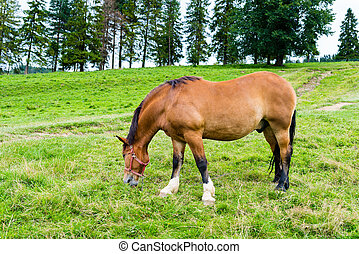 horse grazing in a meadow in the mountains