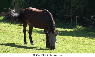 Horse grazing in a meadow.