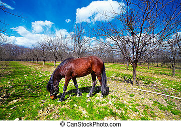 Horse grazing in an orchard