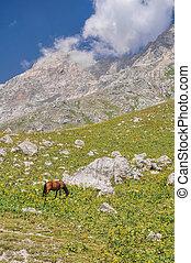 Kyrgyzstan - Horse grazing in scenic mountain range in ...