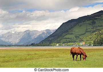 Horse grazing in the Alps
