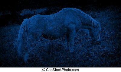 Horse Grazing In The Country At Night