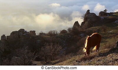 Horse grazing in the mountains on a cloudy sky background (Full HD)
